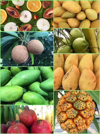 Collage of patterns with fruits. Collection of tropical fruits background.
