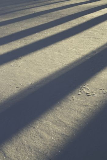 Shadows in Snow in winter time.