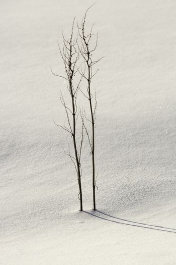 Plants in Winter with snow.