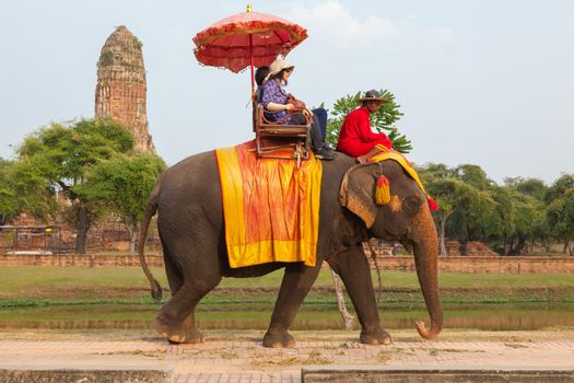 AYUTTHAYA - DECEMBER 14, 2014:Elephant is walking at a scenic route taken during a visit to the historic site and behind the praram Temple on december 14,2014, Ayutthaya, Thailand.