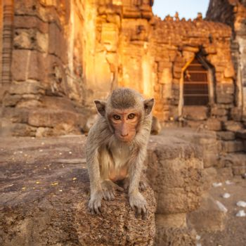 Baby monkeys in Thai Temple,Lopburi, Thailand.