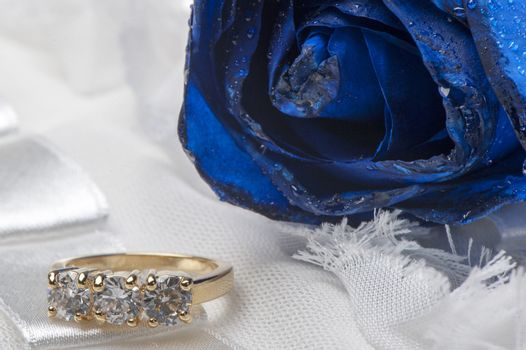 roses and wedding rings on white background