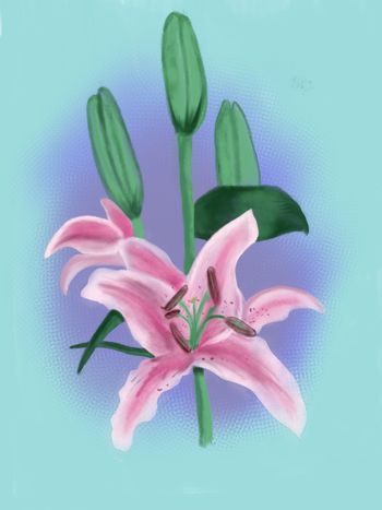 Hand drawn background with of a lily. Watercolor image illustration.