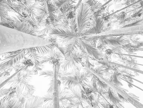 White background texture of palm trees