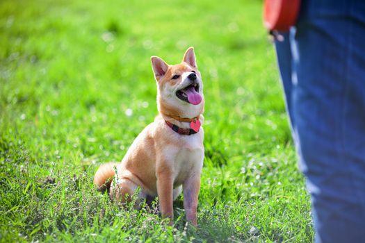 Training with dog