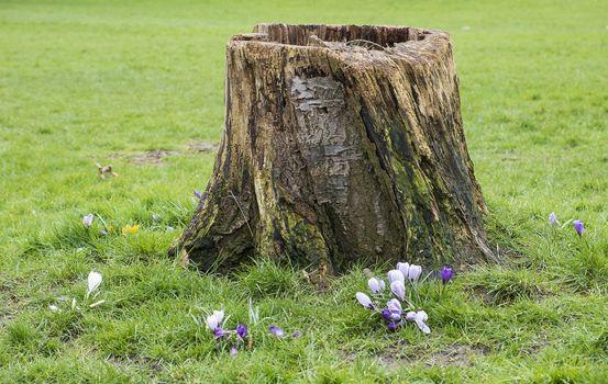 tree stump in grassland