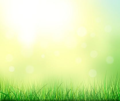 Abstract summer natural background. Grass in the background of sunlight.