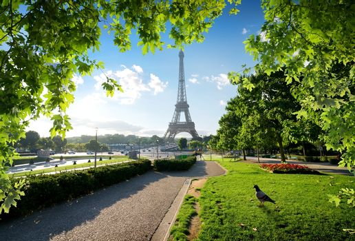 Dove and Eiffel Tower