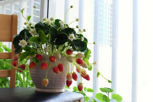 Amazing clay flower art with strawberry pot make from clay with white flower, red ripe strawberries and green leaf, handmade product for home decor