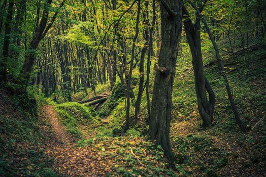 Scenic Forest Creek