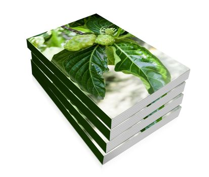 book of a noni fruit on the tree
