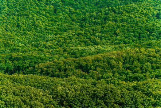 Dense Green Forest Background