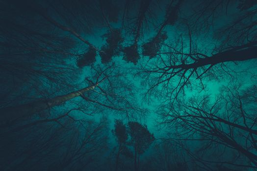 Spooky Forest Canopy