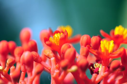 Macro Nature. Exotic Plants in the Macro Photography