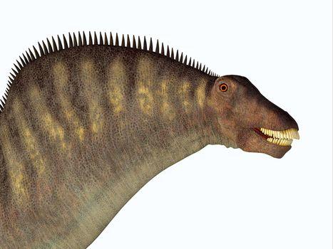 Amargasaurus was a herbivorous sauropod dinosaur that lived in Argentina in the Cretaceous Period.