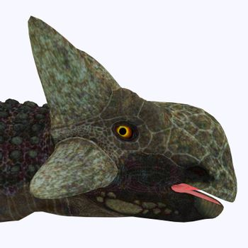 Ankylosaurus was a herbivorous armored dinosaur that lived in North America in the Cretaceous Period.