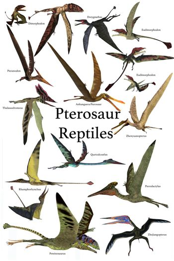 A collection of various Pterosaur reptiles from different prehistoric periods of Earth's history.