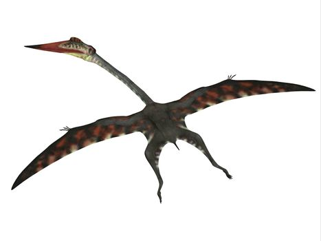 The carnivorous Quetzalcoatlus was a flying pterosaur reptile that lived in North America in the Cretaceous Period.