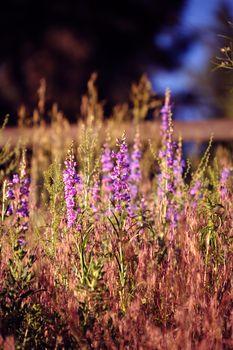 Colorful Summer Meadows. Colorado Meadows