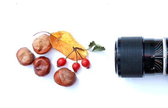 horse chestnut, camera lens, leaf and rose hips