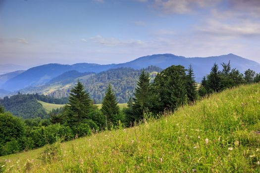 glade with coniferous trees in mountains