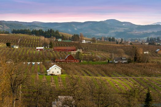 Pear Trees Orchard in Hood River