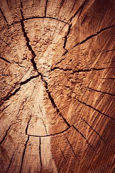 detail of sawn tree trunk
