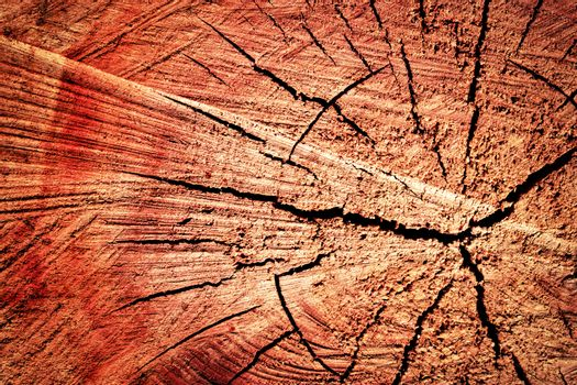 sawn tree trunk