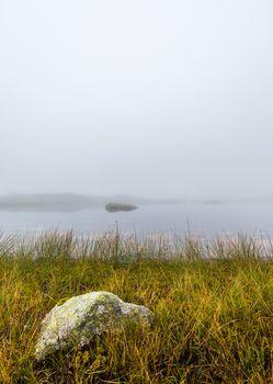 Grass and Rock at the Lake