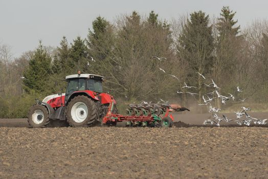 Agriculture red white tractor with plow and pecking seagulls on a future potato field in the Achterhoek in the Netherlands