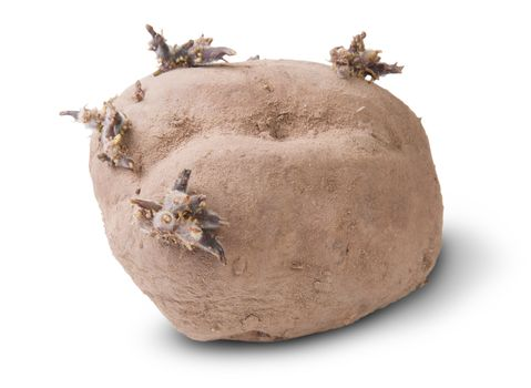 Dirty Sprouting Potatoes