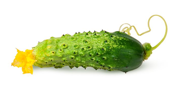 Juicy green cucumber with stem flipped