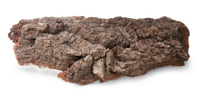 Piece Of Bark Of Old Oak