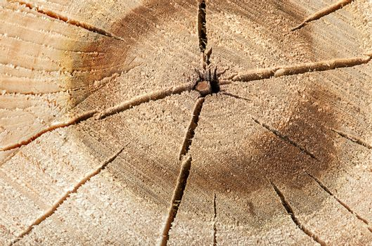 Poplar cut logs with cracks