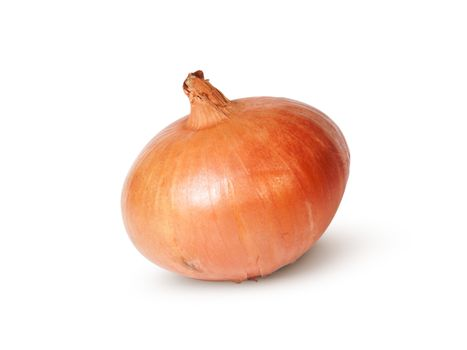 Single Fresh Golden Onion