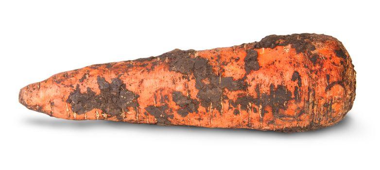 Single Dirty Carrot
