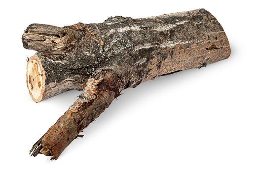 Single poplar log horizontally