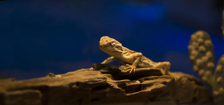 Lizard on trunk