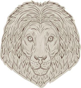 Lion Big Cat Head Mane Drawing
