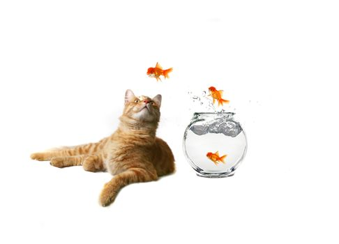 Humorous Image of Cat Watching Escaping Fish