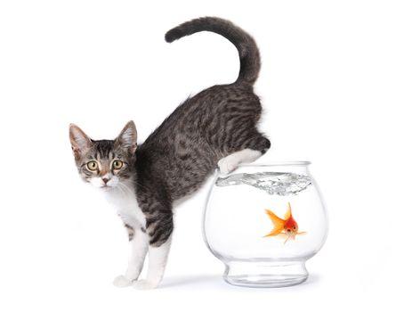 Kitten On a Fishbowl
