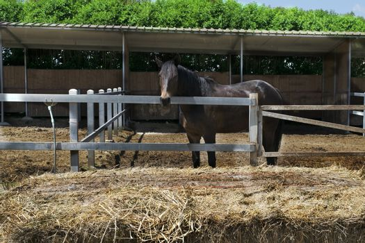 racehorse in a stable