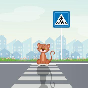 cat on crosswalk