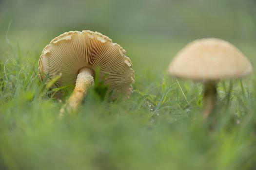Mushrooms with gills Landscape