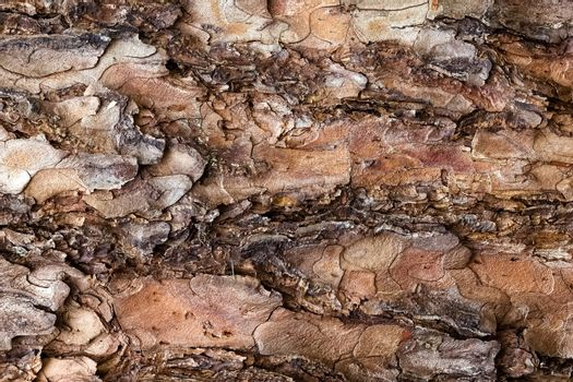 Bark tree background, top view