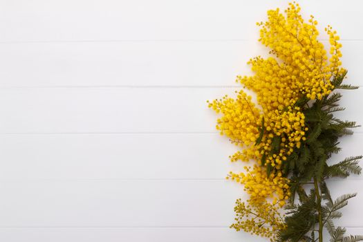 Branch of spring mimosa