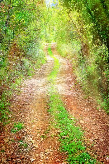 Walkway in secluded deciduous forest