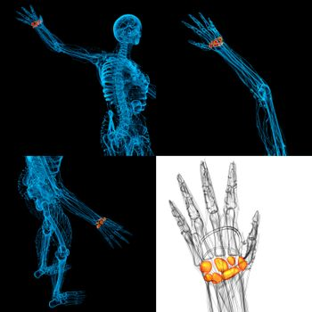 3D rendering illustration of the human carpal bones