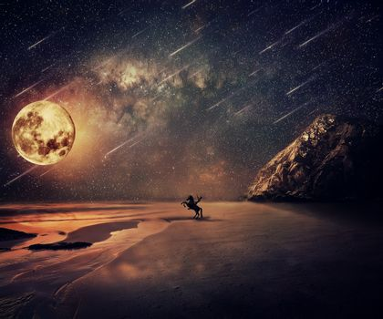 Wild Adventure Moonlight
