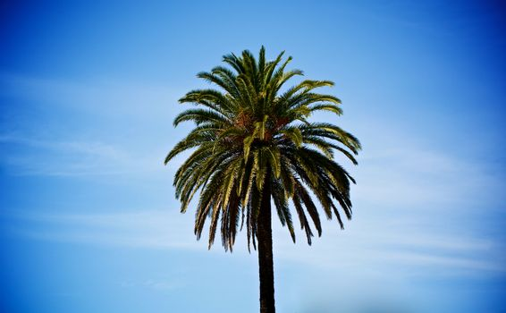 Beauty Single Palm Tree against Blue Cloudy Sky in Summer Day Outdoors